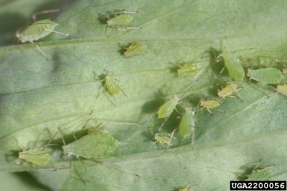Pest Monographs