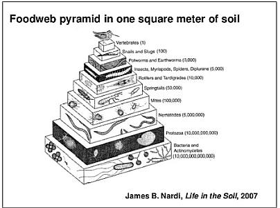 Soil Foodweb Pyramid cropped